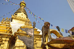 Sitting monkey on swayambhunath stupa in Kathmandu, Nepal Stock Photos