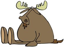 Sitting moose Stock Images