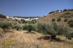White-washed Greek village and olive trees, Lefkes on Paros. Sitting near the top of a small valley lined with olive trees, is the white-washed village of Lefkes Stock Images