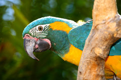 Sitting Parrot Stock Photography