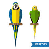 Sitting Parrots Set Royalty Free Stock Images