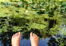 Sitting at pond, summer Royalty Free Stock Images