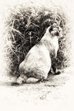 Sitting and prowling tortie color point cat. One cat is sitting and staring at something right side. Black and white fine art outdoors portrait of cute tortie stock photos