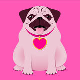 Sitting pug/boxer with necklace with heart ta. Sitting pug/boxer with pink necklace with heart tag vector illustration