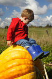 Sitting on a Pumpkin Stock Photo