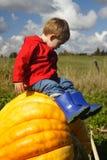 Sitting on a Pumpkin Stock Photo