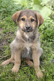 Sitting puppy Stock Photo