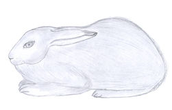 Sitting rabbit sketch Stock Image