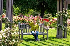 Sitting Among the Roses. These roses are at the Botanical Gardens in Norfolk, Virginia Stock Images