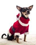 Sitting Santa dog Royalty Free Stock Images