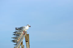 Sitting seagull Stock Photos