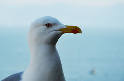 Sitting seagull bird head and sea background photo Stock Photo