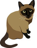 Sitting Siamese Cat Stock Photo