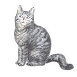 Sitting silver tabby cat. Image of a thoroughbred cat. Watercolor painting Royalty Free Stock Photos