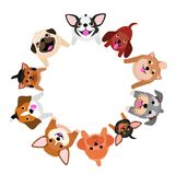 Sitting small dogs looking up in circle. With colors vector illustration