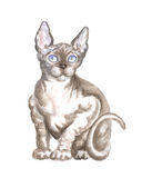 The sitting sphinx cat. Image of a thoroughbred sphinx cat. Watercolor painting Stock Images