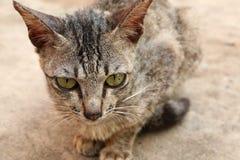 Sitting Street Cat Stock Images