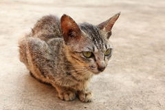Sitting Street Cat. Lonely sitting street cat is looking at a camera Royalty Free Stock Photo