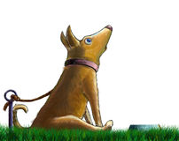 A sitting surprised dog Royalty Free Stock Images