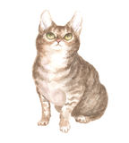 The sitting tabby cat. Image of a thoroughbred cat. Watercolor painting Royalty Free Stock Images