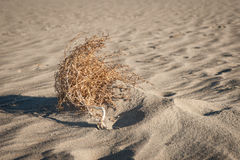 Sitting Tumble Weed Stock Photos