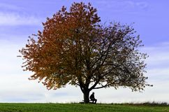 Sitting under the tree Royalty Free Stock Photography