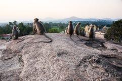 Sittng indiano dei langurs sul punto di vista in Hampi, il Karnataka, India Fotografie Stock