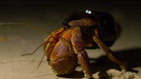 Situação engraçada O caranguejo de eremita adulto grande obteve a casa nova em garrafa de vidro quebrada Amostra ecológica da mac video estoque