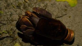 Situação engraçada O caranguejo de eremita adulto grande obteve a casa nova em garrafa de vidro quebrada Amostra ecológica da mac filme