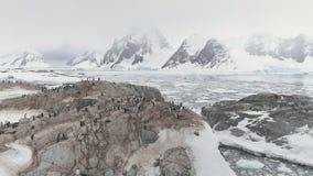 Situación de la colonia de los pingüinos en la montaña de la Antártida almacen de metraje de vídeo