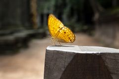 Situación de la mariposa en el pilar de madera imagen de archivo libre de regalías
