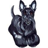 Situación de la raza de Terrier del escocés del perro del bosquejo del vector Fotos de archivo libres de regalías