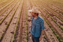 Situación del granjero en el campo cultivado de la soja, opinión de alto ángulo fotografía de archivo libre de regalías