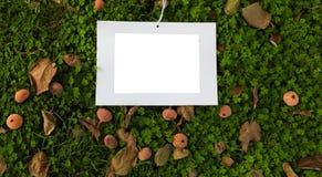 Situación del marco de la foto en la hierba con la dispersión de la hoja de la fruta y de higo fotos de archivo libres de regalías