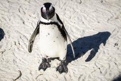 Situación del pingüino en la arena imagenes de archivo