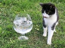 Situación divertida del gatito en la hierba en el jardín al lado del aqu imagen de archivo libre de regalías