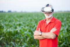 Situación mayor del agrónomo o del granjero en campo de maíz verde y usar gafas de VR imagen de archivo libre de regalías