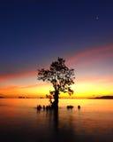 Situación pasada del árbol Imagen de archivo