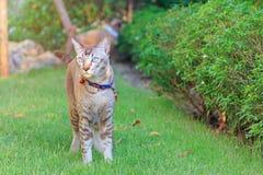 Situación y mirada del gato Foto de archivo libre de regalías