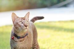 Situación y mirada del gato Fotos de archivo libres de regalías