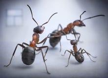 Situation humaine de pièce de fourmis de scandale de famille Images stock