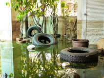 Situazione dopo l'inondazione pesante per un mese fotografia stock libera da diritti