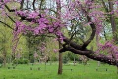 Sity parkerar trädet royaltyfria bilder