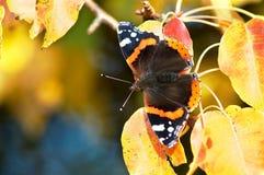 Sitzen auf Birnebaum Blättern Stockbilder