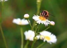 Sitzen auf einer Blume Stockfoto