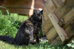 Sitzen der schwarzen Katze Lizenzfreie Stockbilder