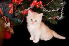 Sitzen unter dem Weihnachtsbaum Lizenzfreies Stockfoto