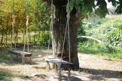 Sitzen unter einem großen Baum stockfotografie