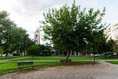 Sitzende Bänke und ein grüner Baum Stockfotografie