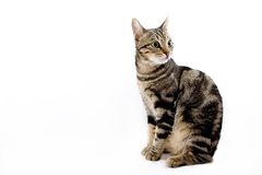 Sitzende Katze Lizenzfreie Stockfotos